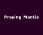 View all Praying Mantis tour dates